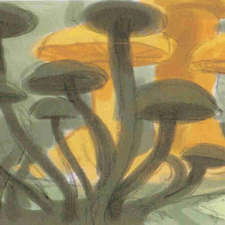 Alice-wonderland-mushroom-forestA